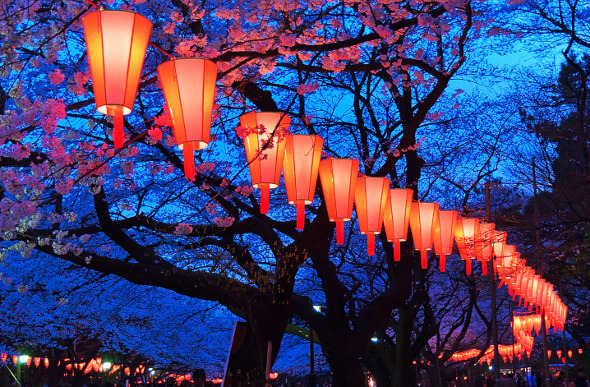 Japanese lanterns hanging from the trees