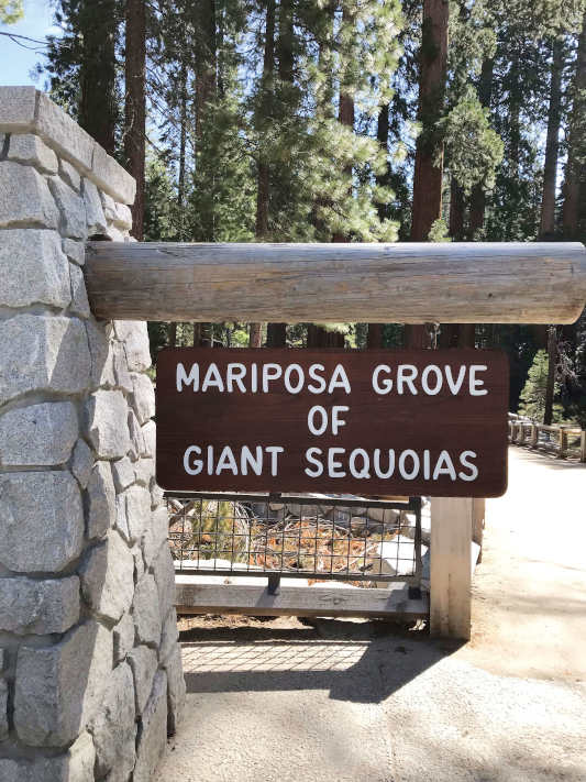"A wooden sign that reads ""Mariposa grove of giant sequoias"""