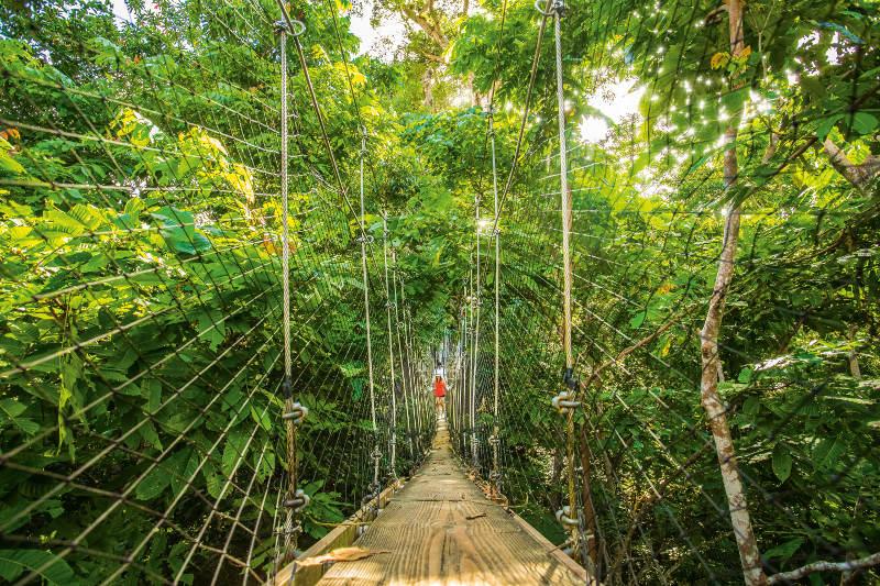 Rainforest canopy walk Samoa