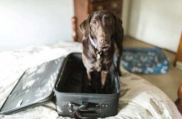 dog standing in empty suitcase