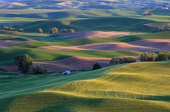 The rolling hills of the Palouse in Idaho, USA.