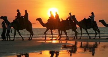 Enjoy a camel ride at sunset