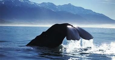Whale watching aboard a wildlife cruise