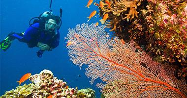 Explore the Reef