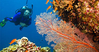 Explore the Reef