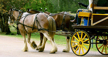 Horse and Wagon Ride