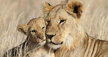 Safari Sights