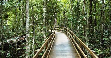Head North to the Daintree
