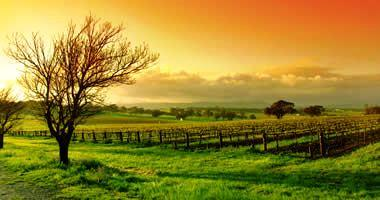 Explore the Barossa Valley
