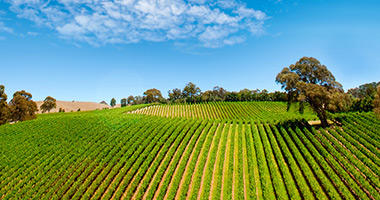 Barossa Vineyards