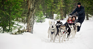 Dog Sledding in Alberta