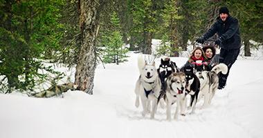 Dog Sledding in Alberta