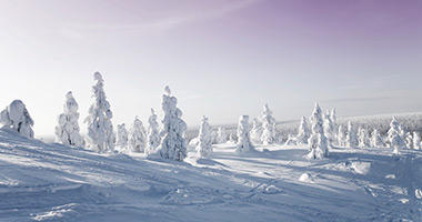 Picturesque Pine Forests