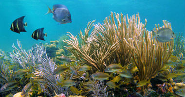 Polynesian Coral Reef