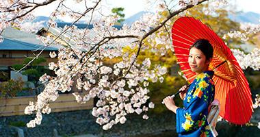 Enjoy the Springtime Cherry Blossoms