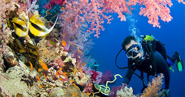 Head North to Explore the Reef