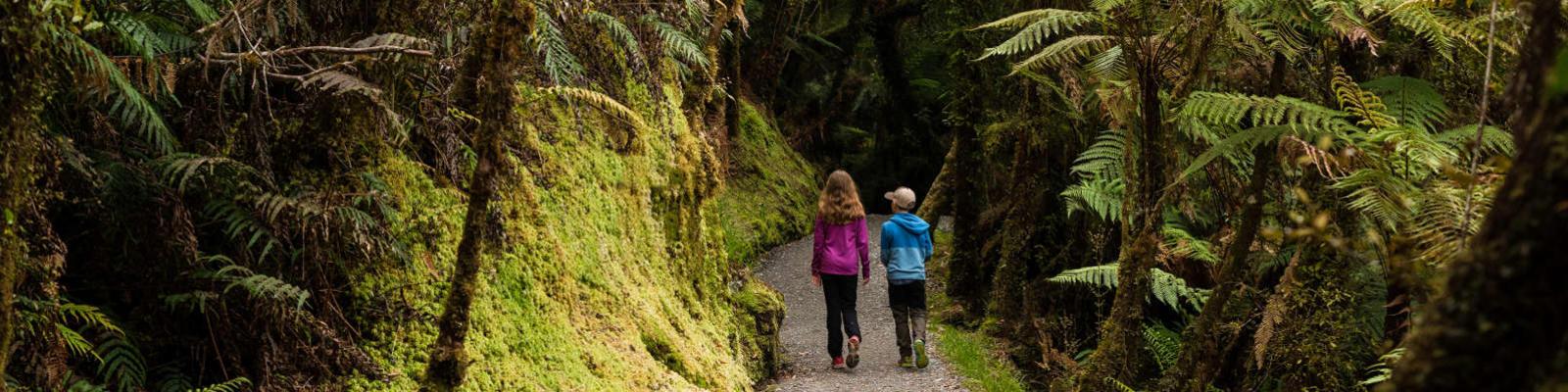 children walking through forest in new zealand