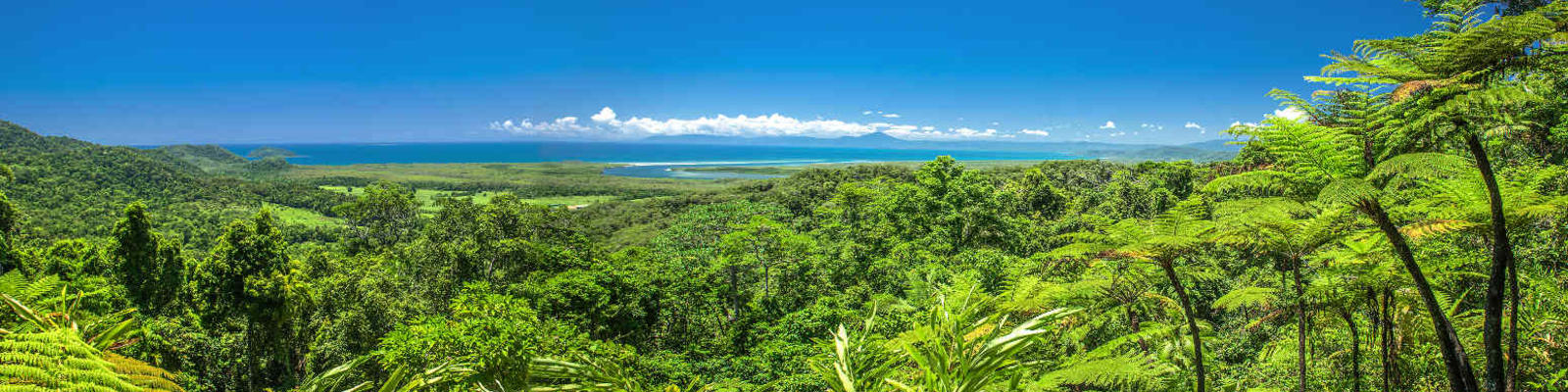 A view of the Great Barrier Reef over the treetops of the Daintree Rainforest in Tropical North Queensland.