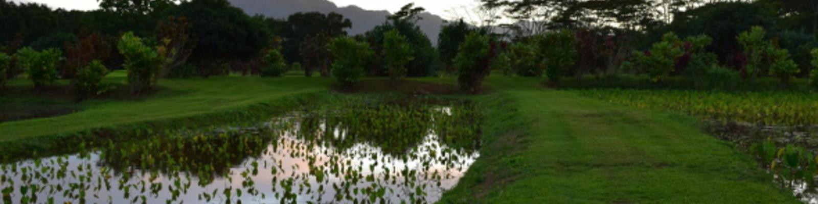 taste the real hawaii on the garden island of kauai - The Garden Island