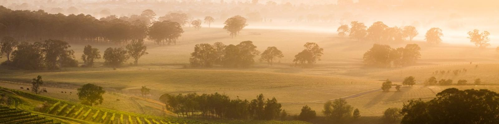 New South Wales wine country. Photo: Getty Images.