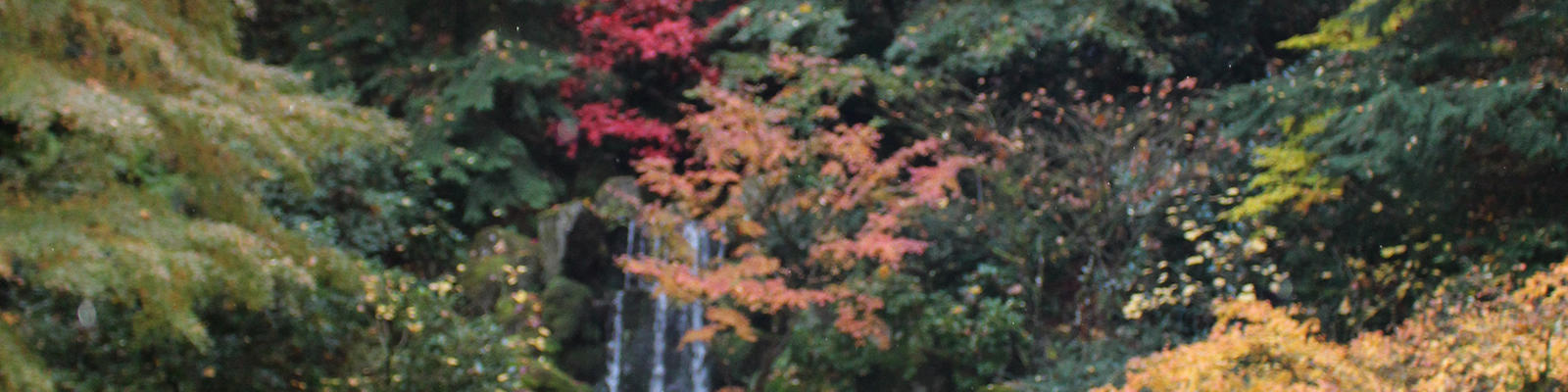 Portland Japanese Garden in November with fall foliage on display