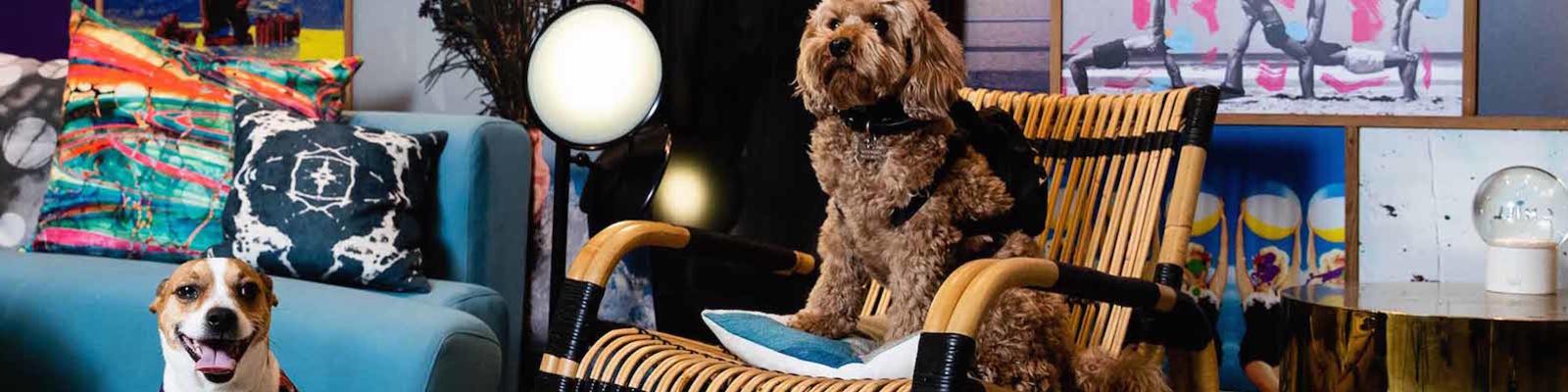qt hotel dog stays