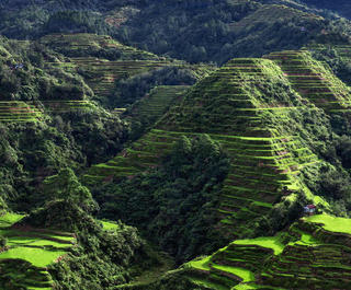The rice terraces of Banaue in the Philippines.