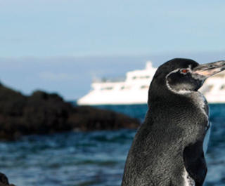penguins with cruise ship in distance behind