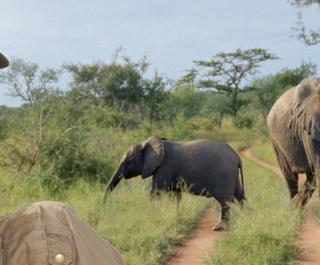 Child on African safari.