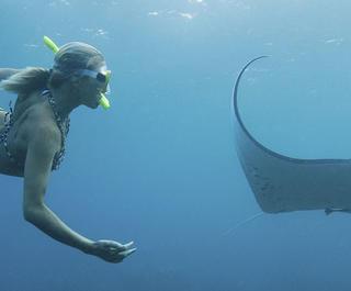 swimming with manta rays in fiji