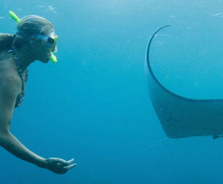 woman swimming with manta ray