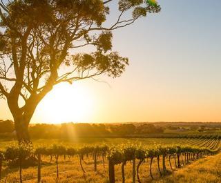 Vineyards Barossa Valley, Adelaide - Australia