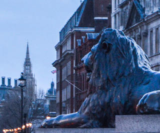 lions in trafalgar square london at dusk