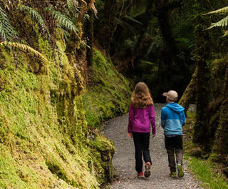 children walking through forest in new zealand