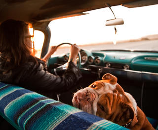 dog in passenger seat of car