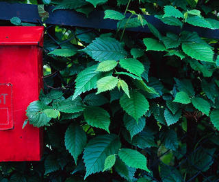 A red post box against a leafy green hedge.