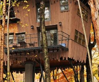 Tree houses,  apart from being unique places to stay, are an absolute delight if you're a nature lover. Photo: Tranquil Resort.