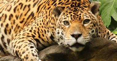 Choose a specialist in wildlife adventures