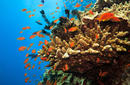 Admire the Marine Life, The Great Barrier Reef, Queensland