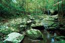 Daintree Rainforest, Queensland