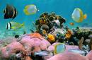 Admire the Marine Life, The Bahamas