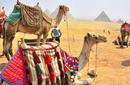 Take a camel ride towards the pyramids