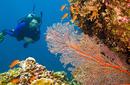 Admire the Marine Wonders