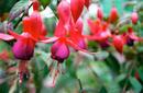 Flowers, Royal Botanic Gardens | by Flight Centre's Tiffany Apatu