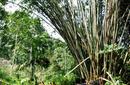 Trekking, Sumatra