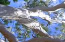 Gum Tree   by Flight Centre's Katrina Imbruglia