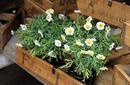 Plants For Sale, Camden Markets   by Flight Centre's Simon Collier-Baker