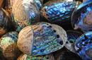 Paua shells, Kaikoura | by Flight Centre's Katrina Imbruglia