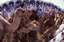 Cattle Market, Nizwa | by Sultanate of Oman Tourism