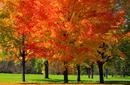 Admire Ottawa in Autumn